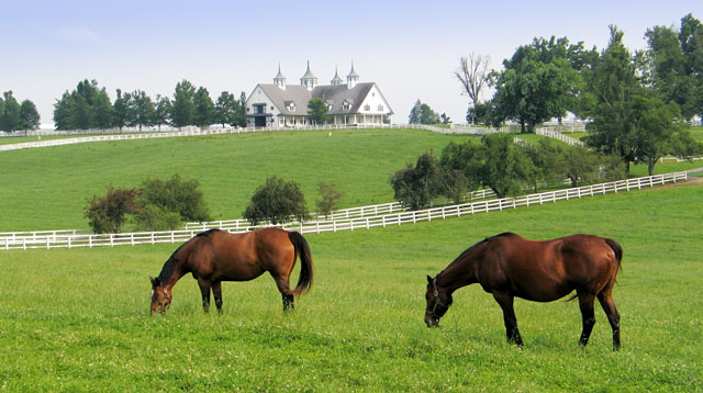 Lexington KY Horse Farm